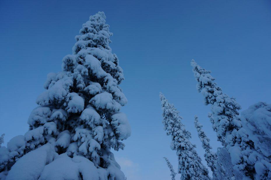 Prachtige besneeuwde bomen