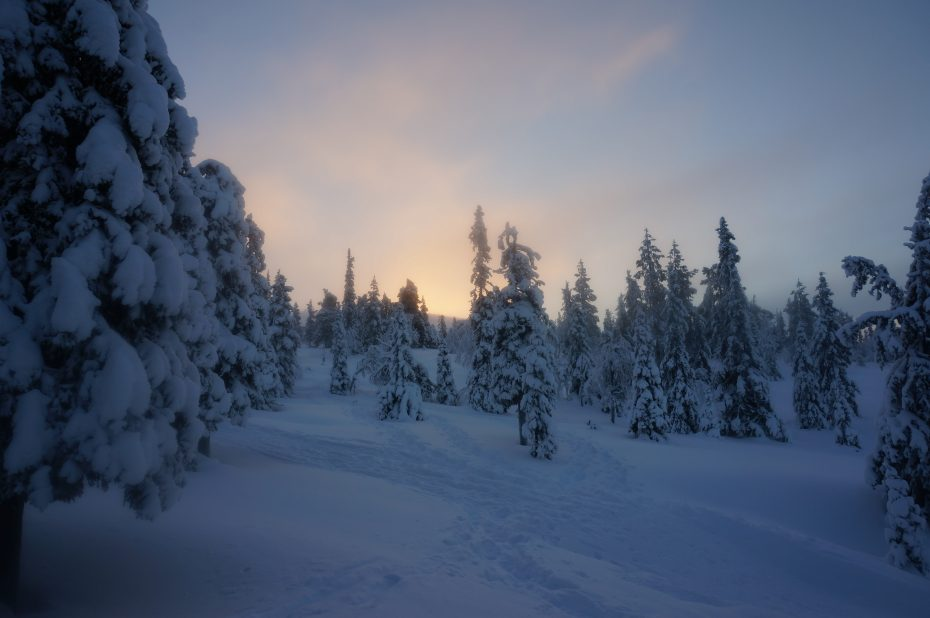 Landschap in Lapland