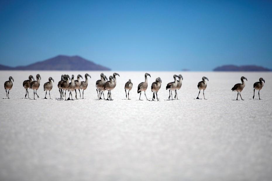 Bestemming onbekend Bolivia