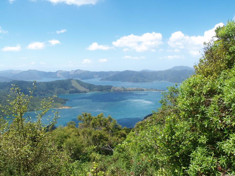 Marlborough Sound – Queen Charlotte track - reisblog Nieuw-Zeeland