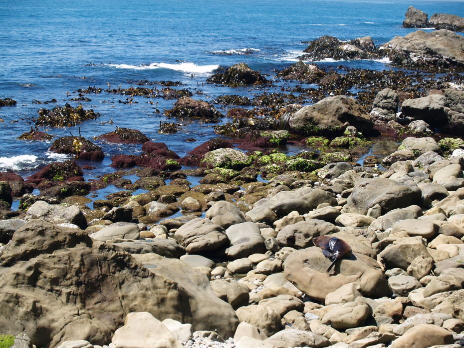 De zeeleeuwen liggen heerlijk in de zon langs de kant van de weg!