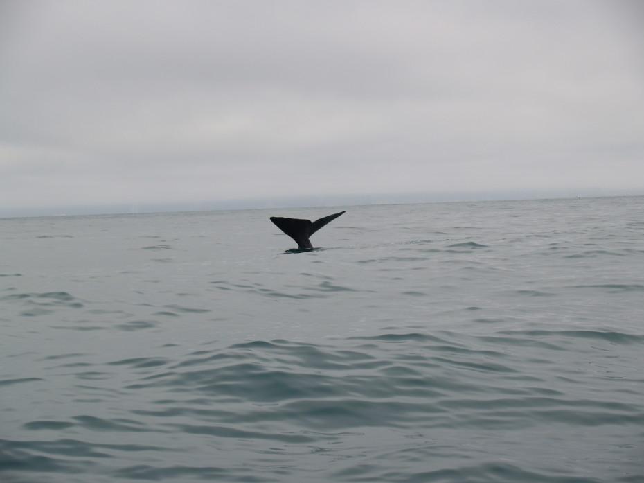 De walvisstaart