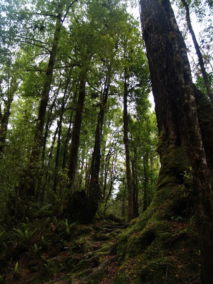 Wandeling omgeving Pancakerocks - reisblog Nieuw-Zeeland