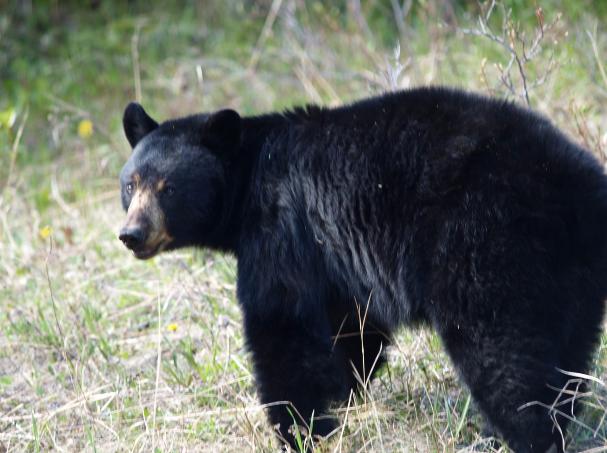 Shortstory: ik zie beren op de weg