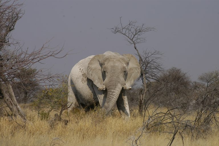 onverwachtse-reismomenten-liefde-voor-reizen-tanzania