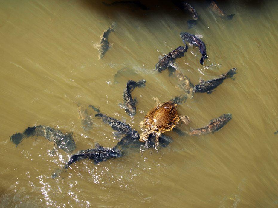 Schildpadden en vissen spotten