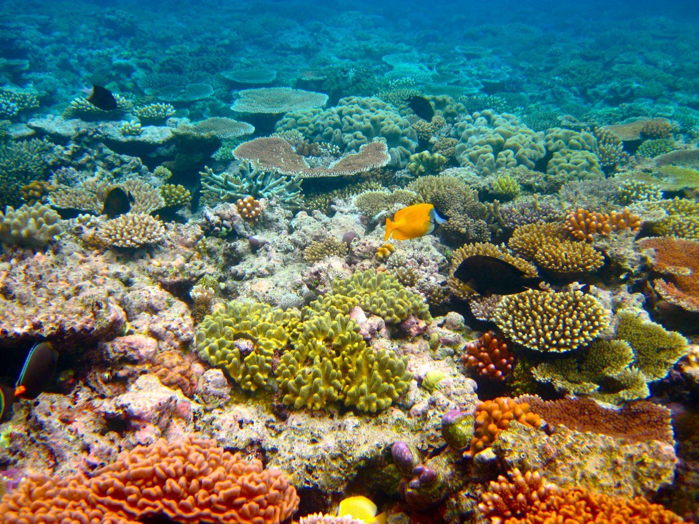 Great Barrier Reef, onder luchtdruk (under pressure)