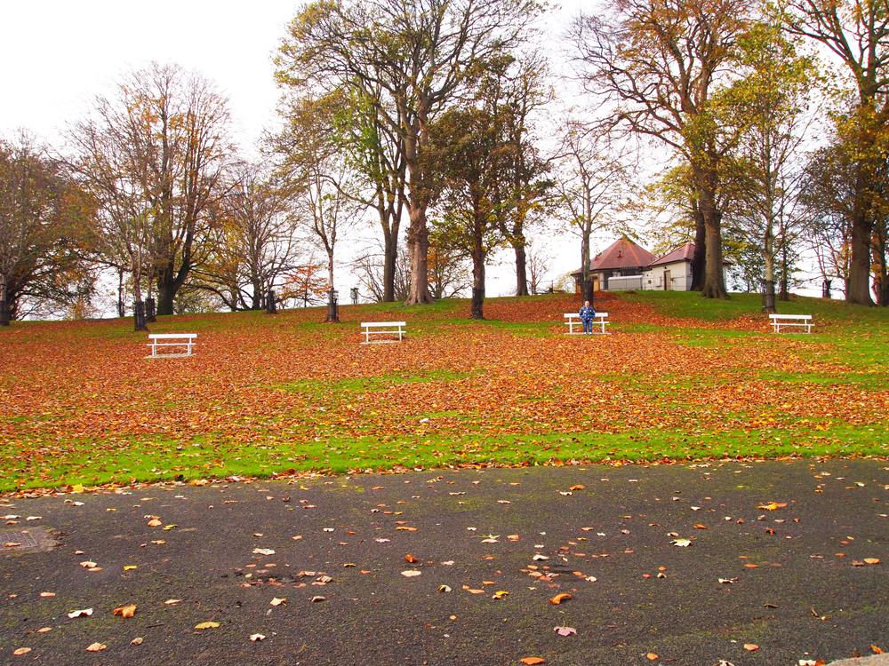 Kerst in Dublin: Phoenix park: grootste park van Europa!