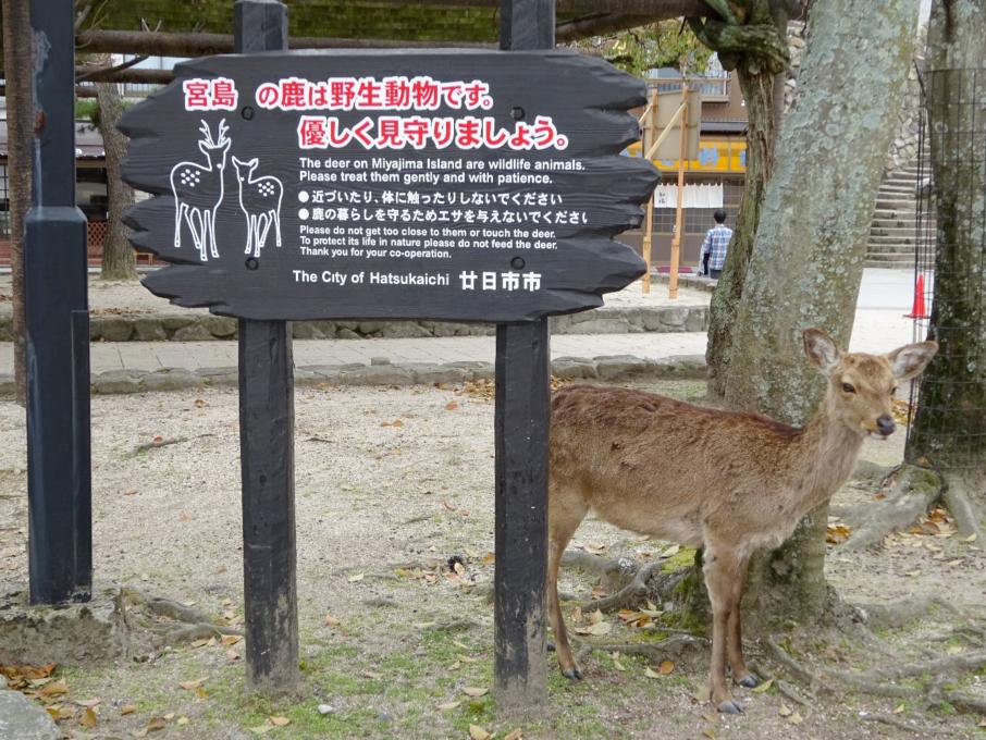 Herten worden als boodschappers van god gezien in het Shintoïsme