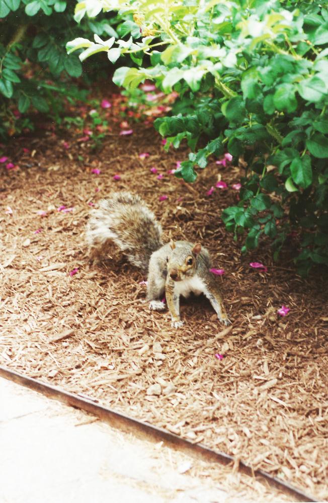 Eekhoorn in Central Park!