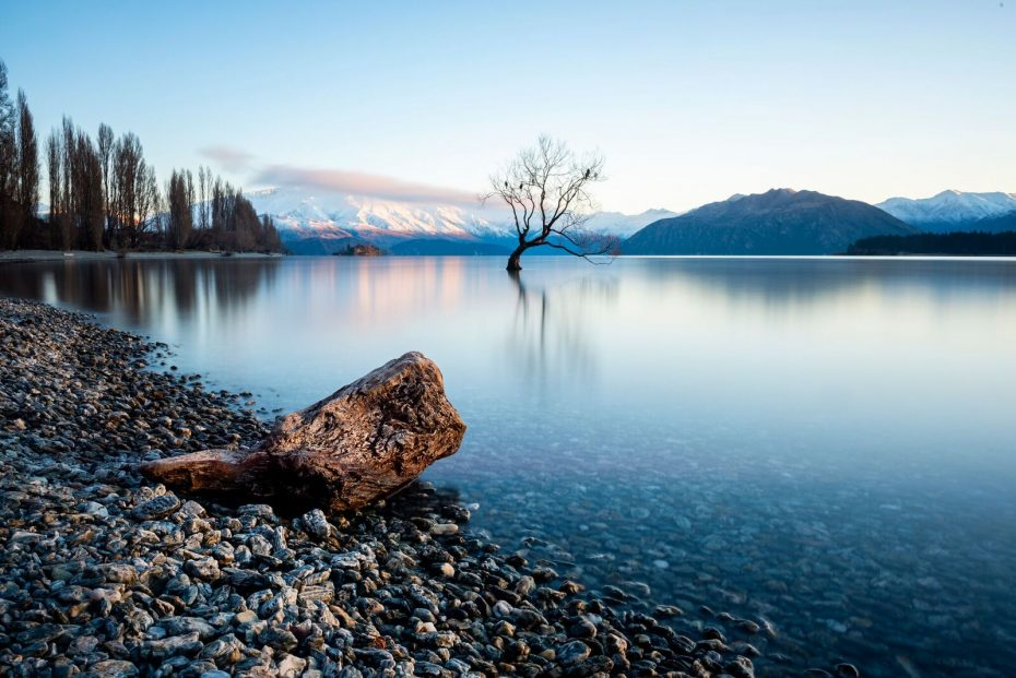 Wanaka tree, New Zealand