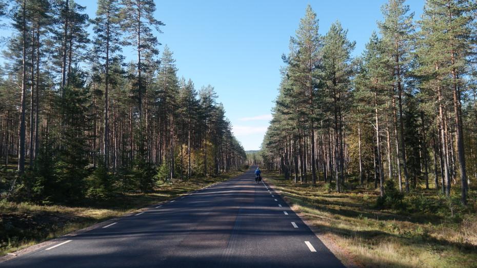 De bomen leiden ons de weg
