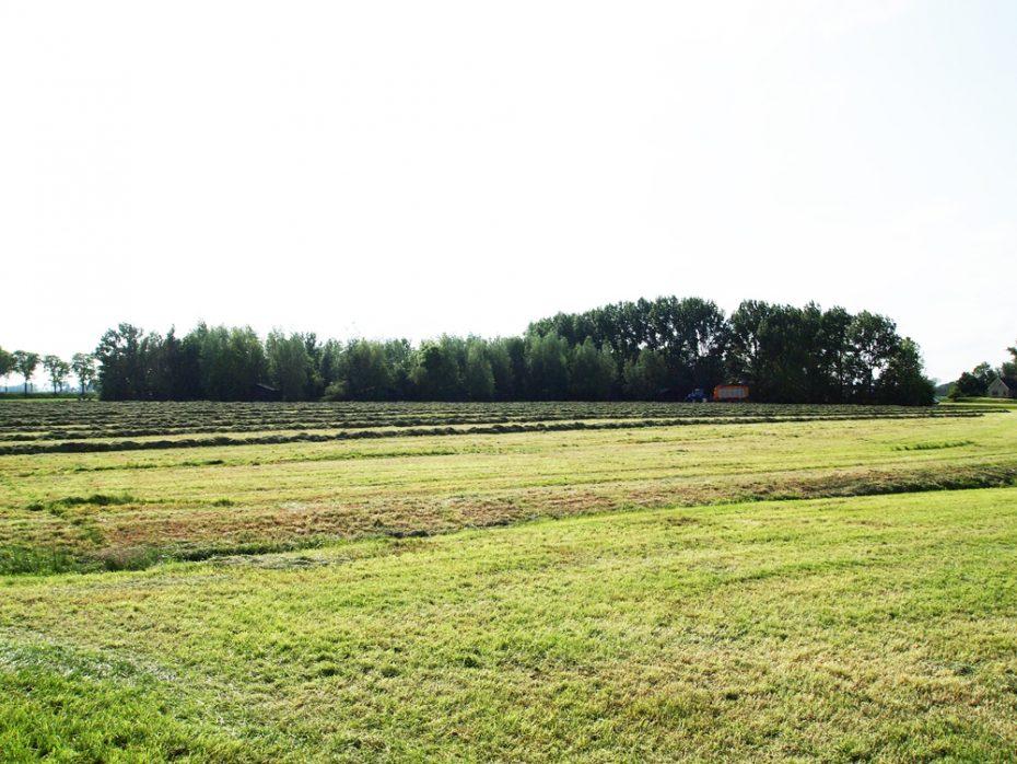 Uitzicht op de tenten van BoerenBed Hoeve Meskenwier