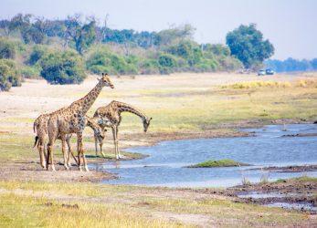 Reistips over Botswana