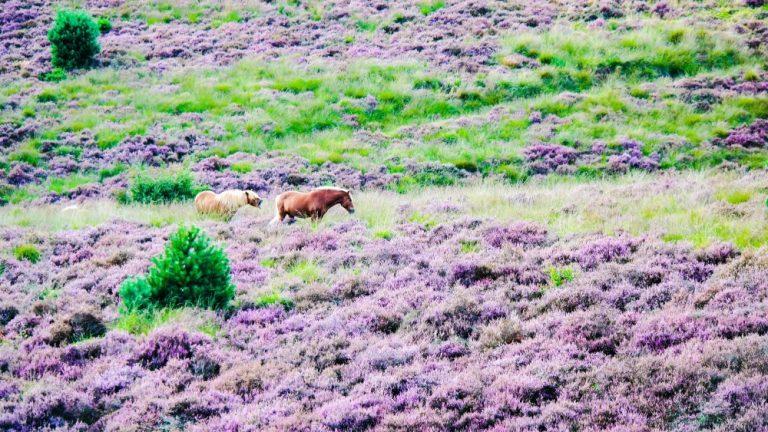 Holland Wildlife - The movie