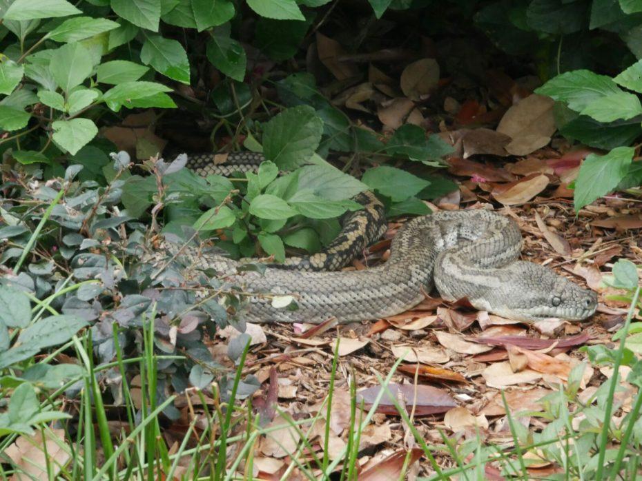 Slang in het park van Brisbane