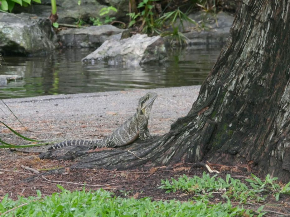 Wildlife in Brisbane