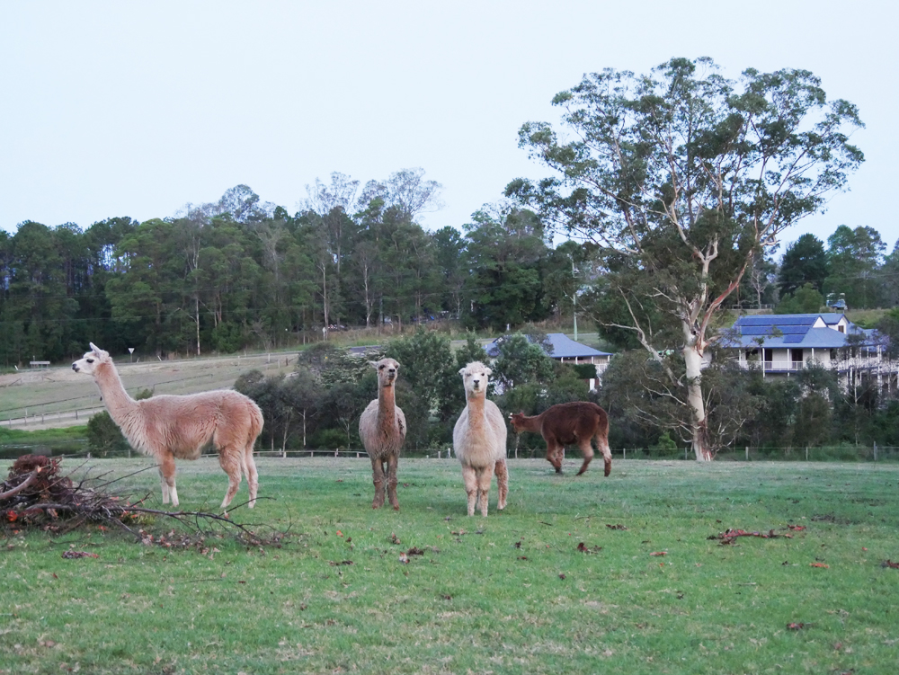 Evergreen Hinterland Homestead, Eumundi