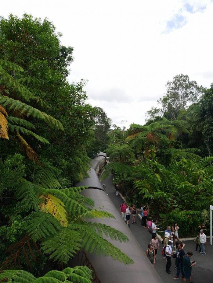 groene-omgeving-regenwoud-kuranda