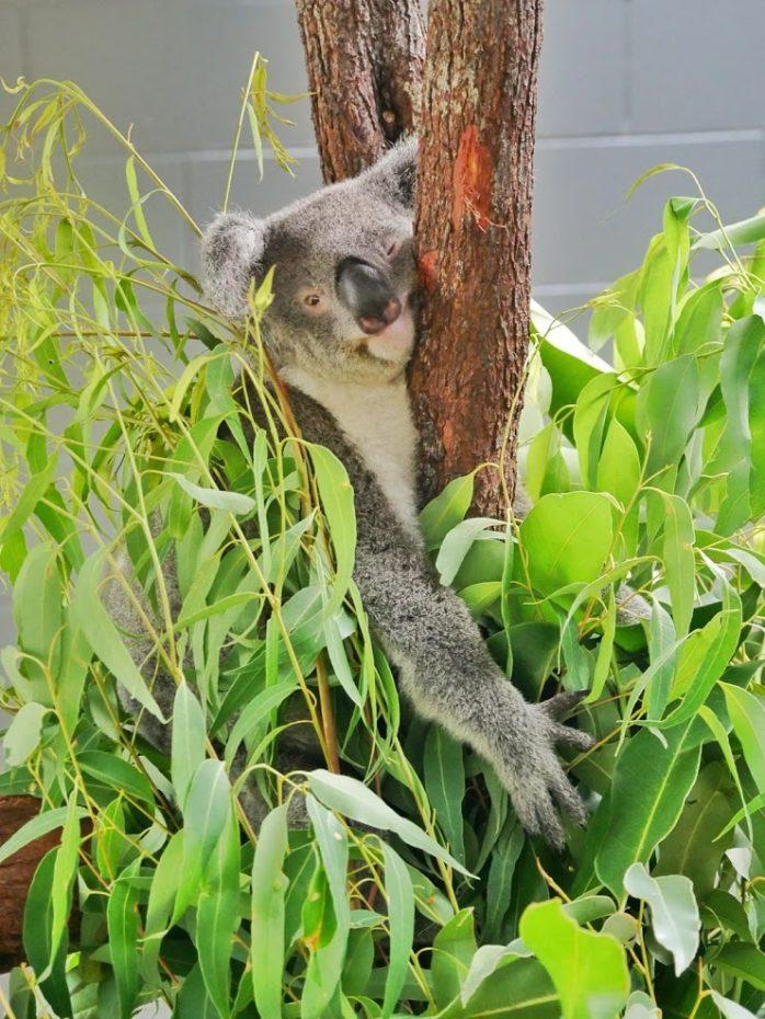 Koala Rainforestation Nature Park