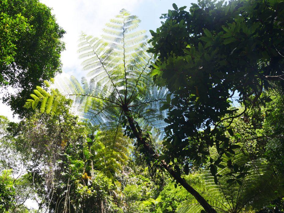 prachtige-bomen-en-planten