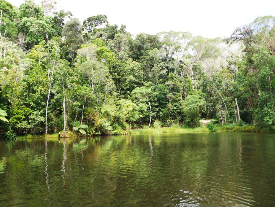 rainforest-kuranda-op-het-water