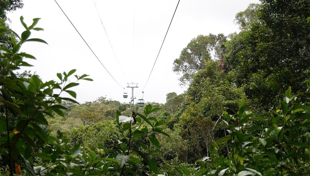 Met de kabelbaan terug over het regenwoud!