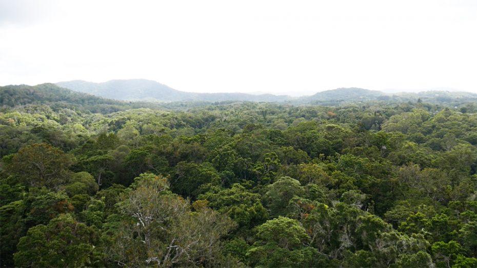skyrail-over-rainforest