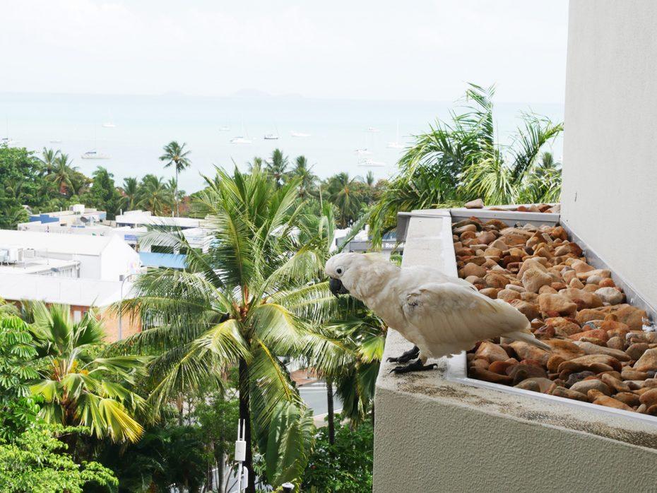 Uitzicht vanuit ons hotel - Kijkend op een Kakatoe! - Oostkust Australië