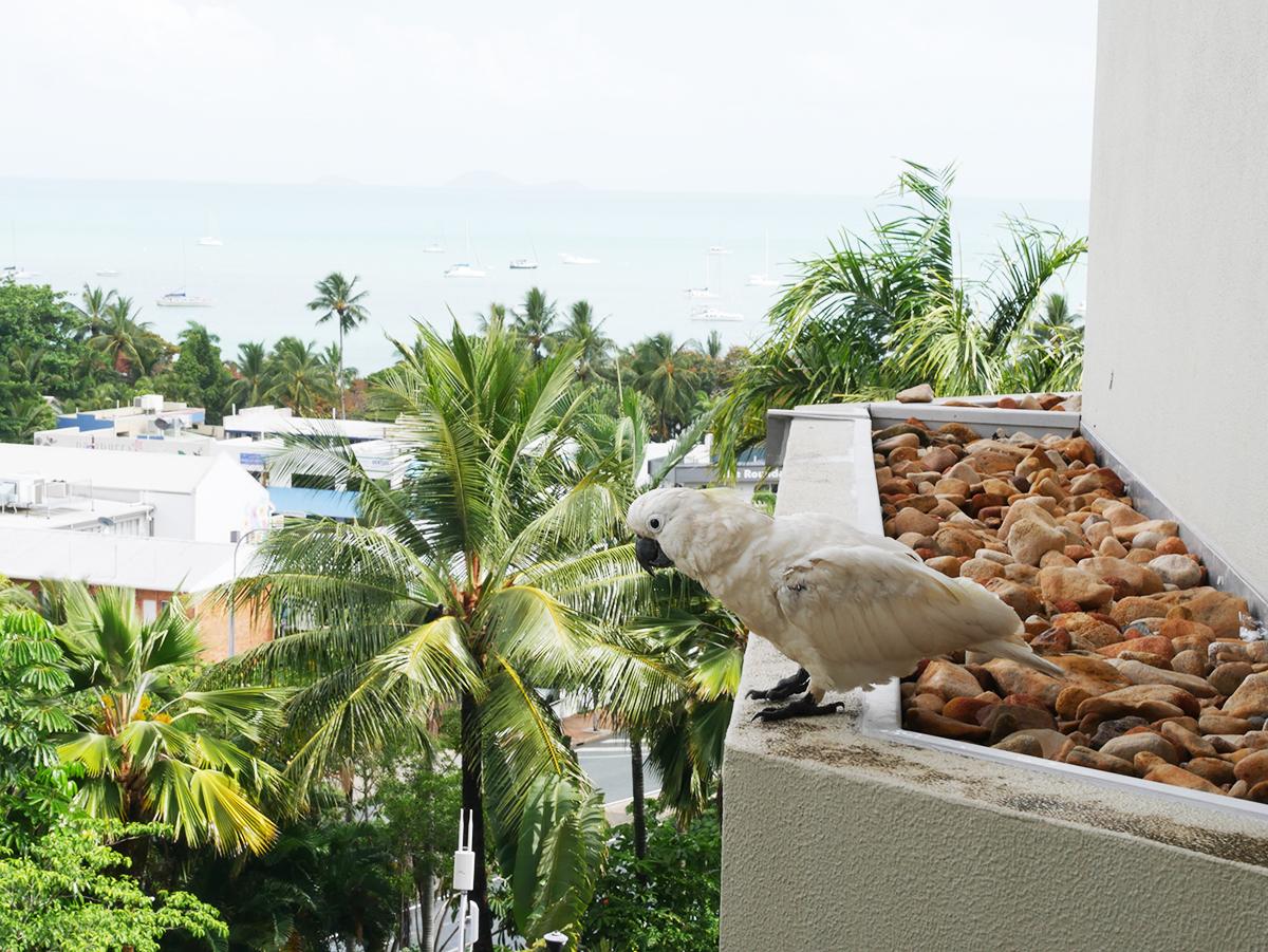 Uitzicht vanuit ons hotel - Kijkend op een Kakatoe!