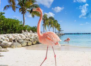 6 to do's op Happy Island Aruba