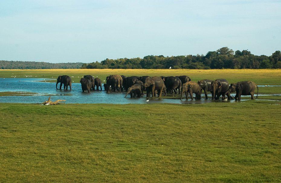 Een paradijs voor de dierenliefhebber!