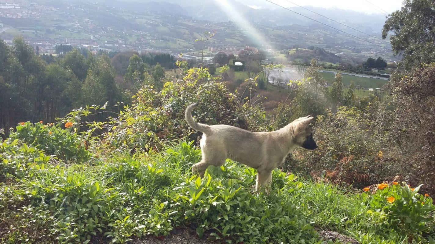 Shortstory: gebeten door een wolf?!