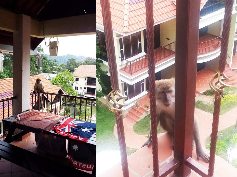 Bezoek op ons balkon op Pangkor!