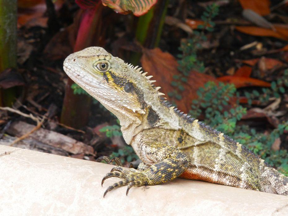 Veel wildlife gespot in Brisbane!