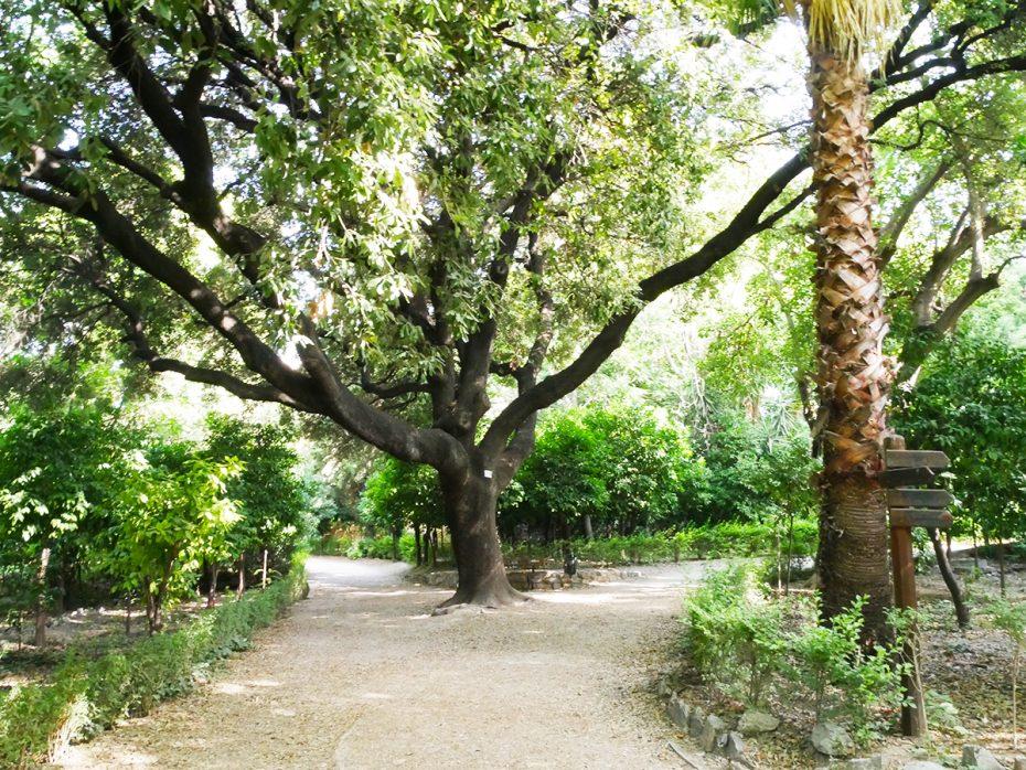 Prachtige boom in het stadspark van Athene!