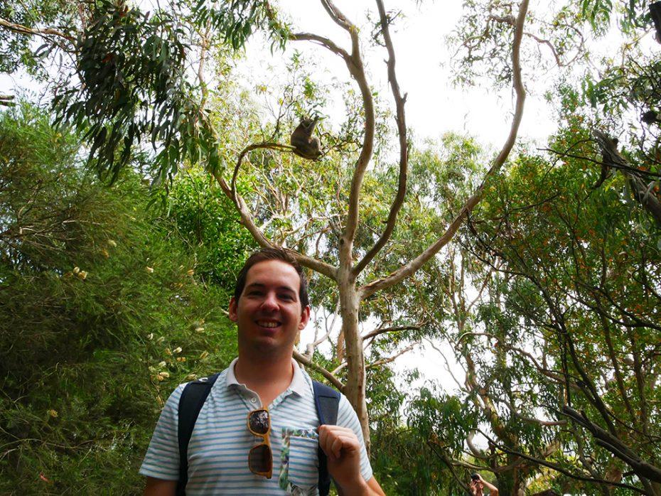 Koala gespot tijdens de Great Ocean Road op tweede kerstdag!