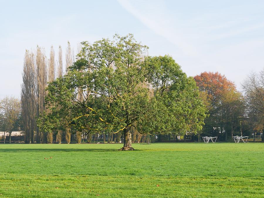 Mooie stadsparken in Den Bosch