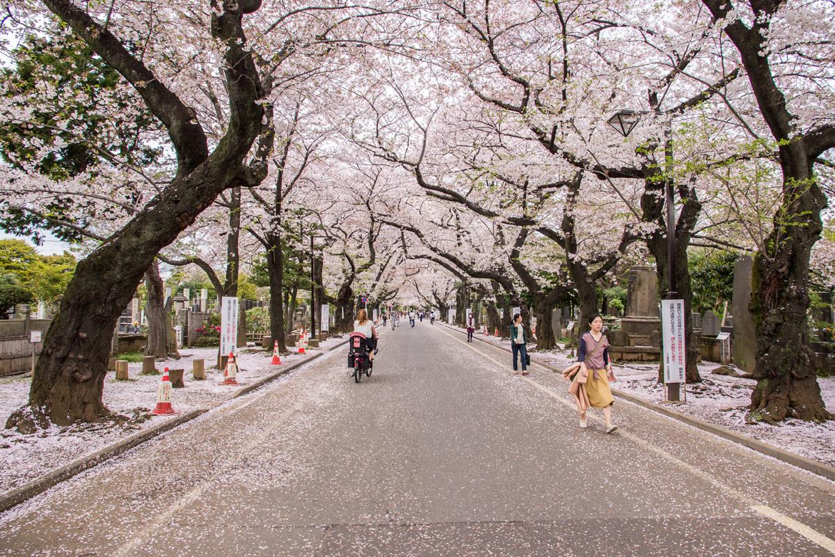 Bloesem in Japan