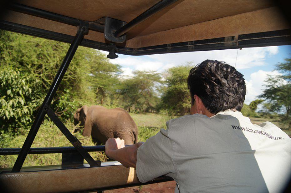 Olifanten spotten in Tanzania