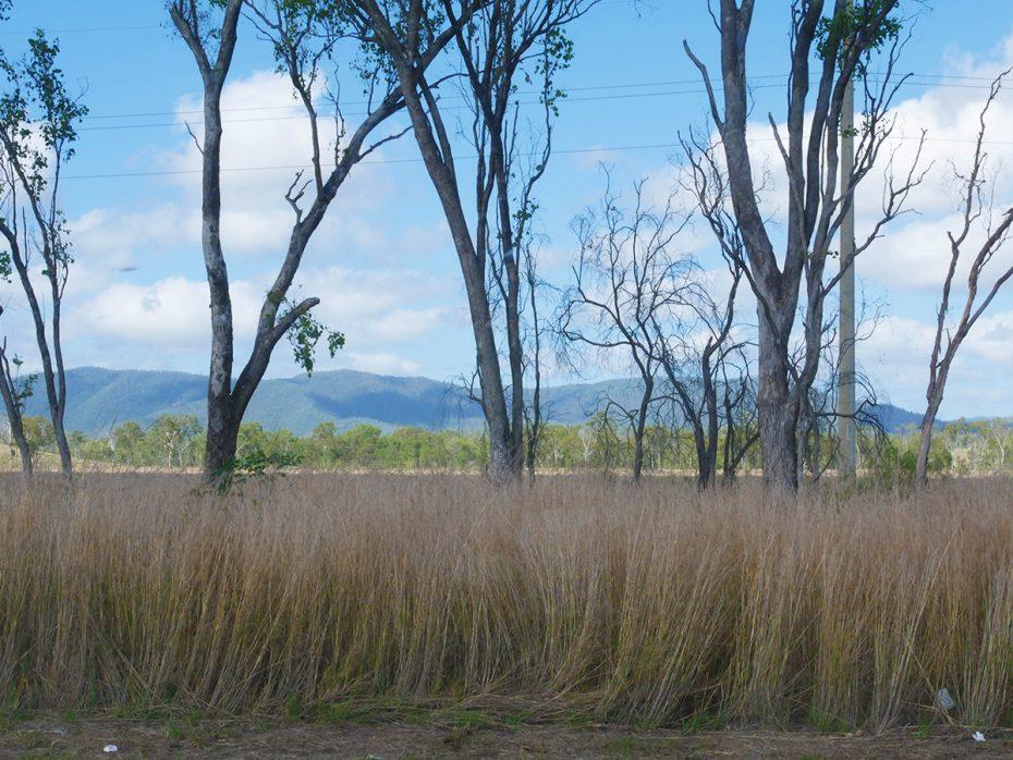 Bijzondere landschappen kwamen voorbij tijdens onze roadtrip in Australië