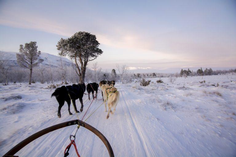De echte winter ervaren in betoverend Zweeds Lapland