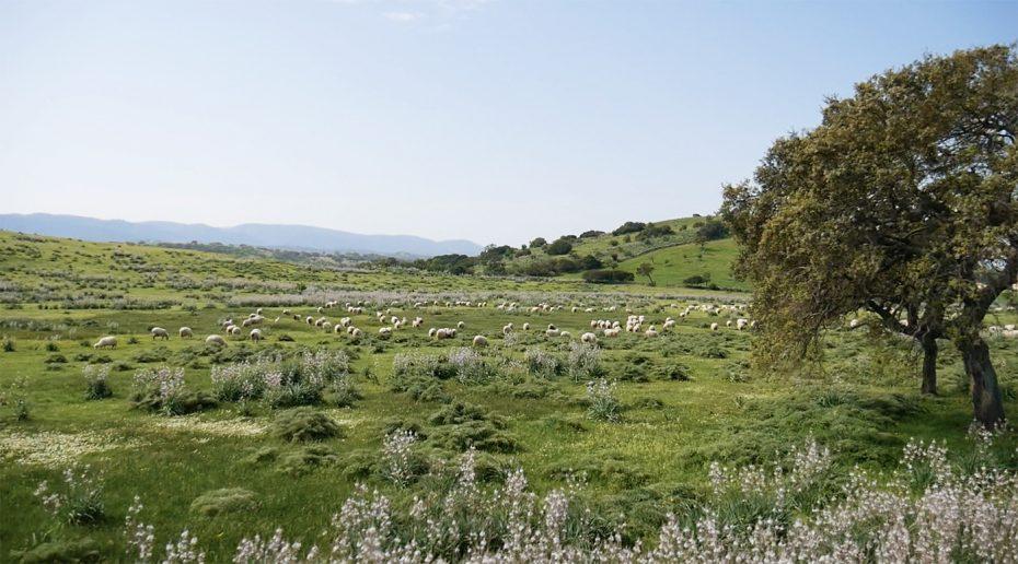 Landschap vol schapen op Sardinië