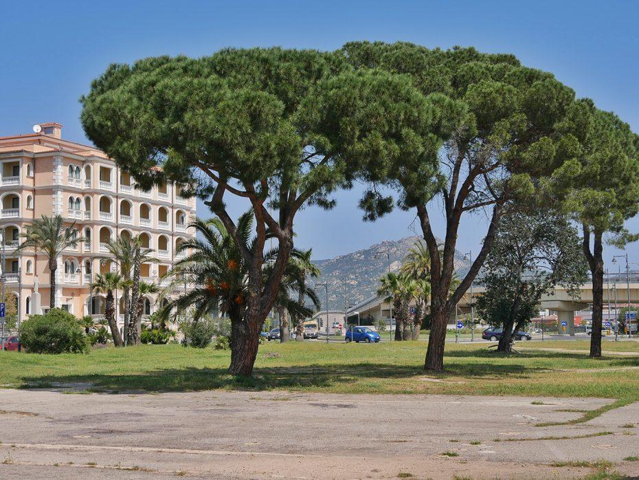 Mooie bomen in de buurt van de haven van Olbia