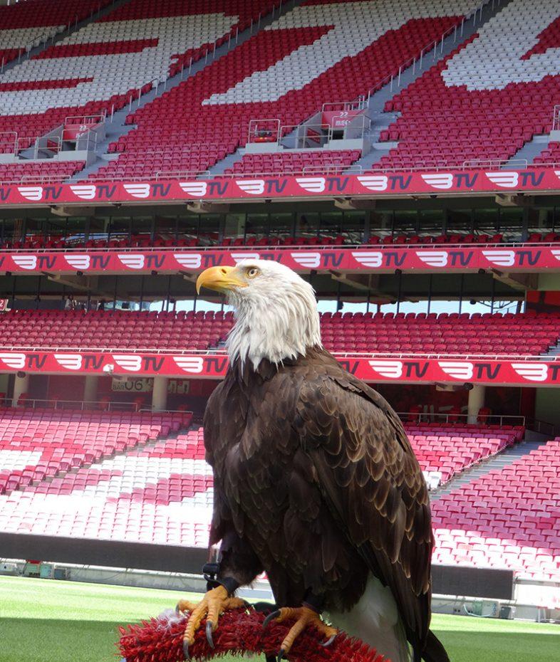 Adelaar Benfica