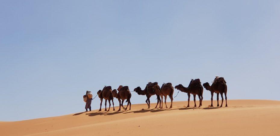 Woestijnen en oases