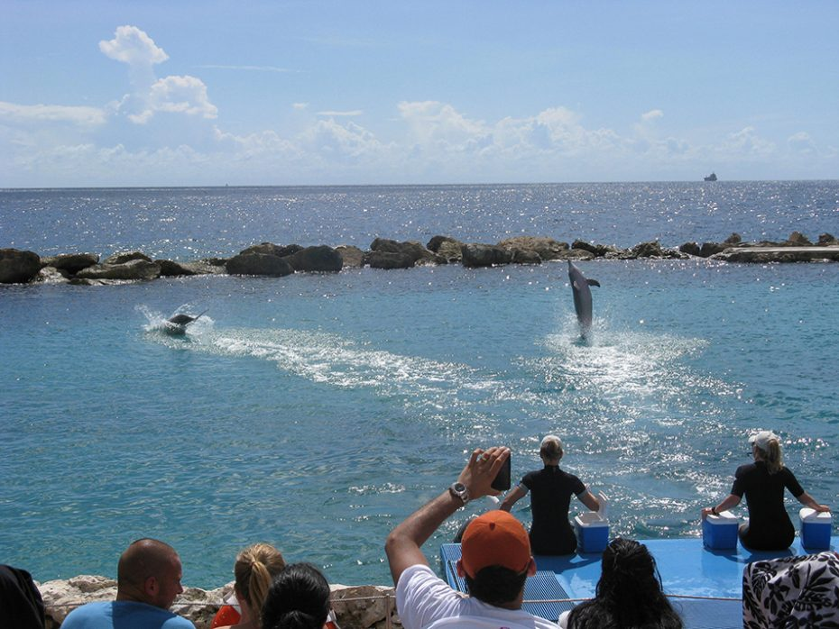 Dolfijnen kijken Curaçao