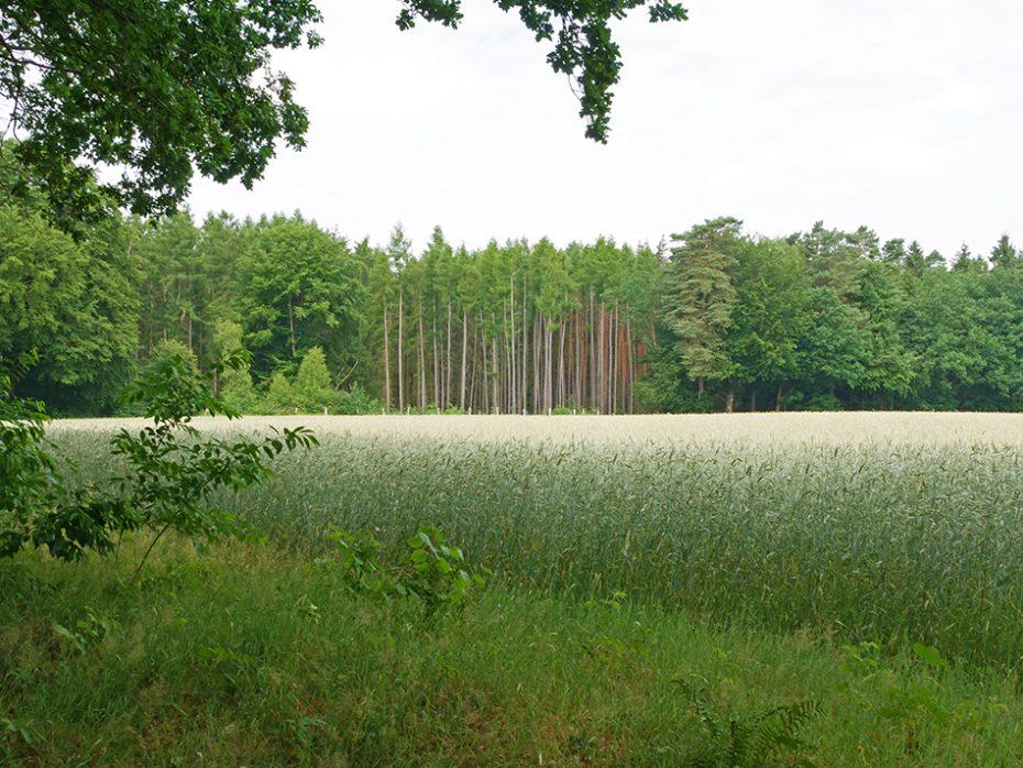 Prachtige natuur gespot tijdens onze wandeling richting Stolzenhagen