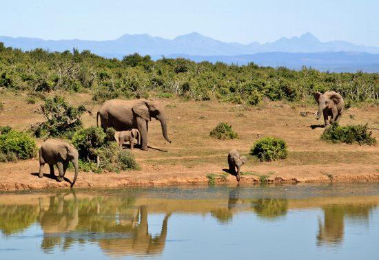 De 5 mooiste dingen om te zien in Zuid-Afrika