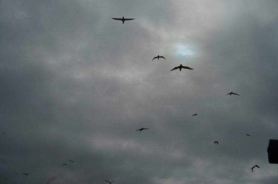Vogels vliegen boven de Lofoten in Noorwegen